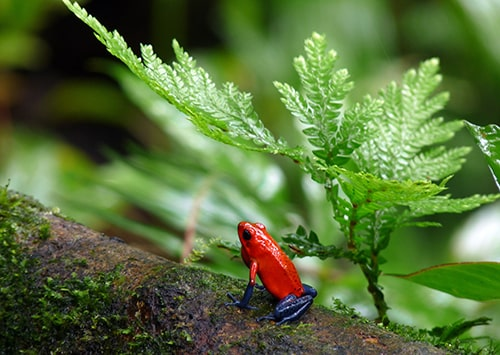Orange frog in a rainforest.