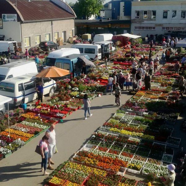 Dvaro Market
