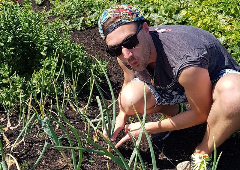 Gerome harvesting spring onions.