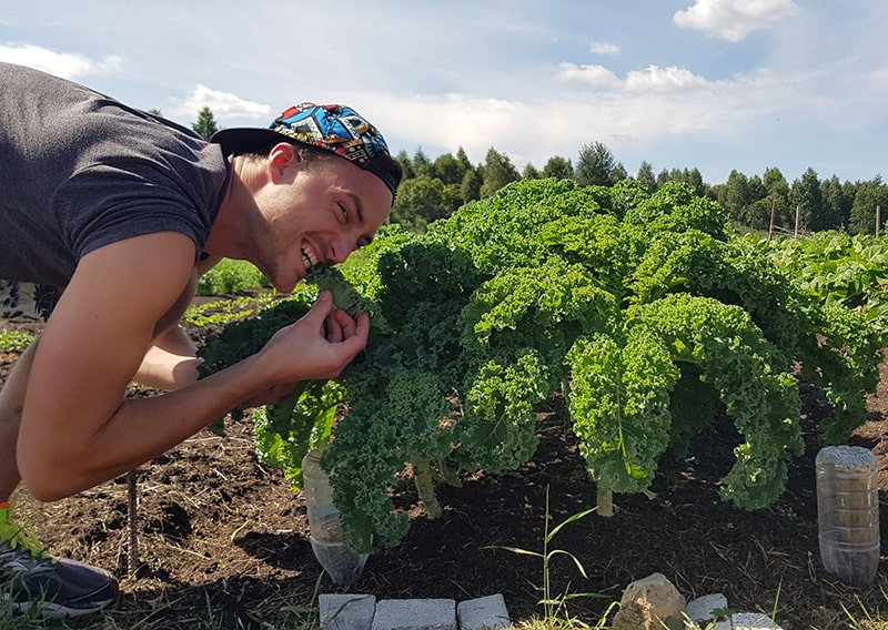 Young man crunching a kale cabbage.